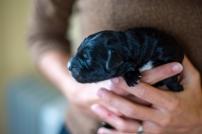 Little black, 2-days old