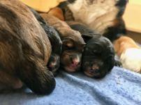 3 Little Puppies