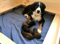 Rhubarb and here puppies